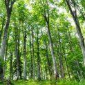 Агенцията по горите планира да изсече 110 хиляди декара гори през 2020 г.
