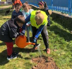 Видински деца засадиха фиданки в Седмицата на гората