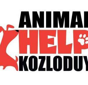Над 60 бездомни кучета от Козлодуй са осиновени през миналата година в Англия