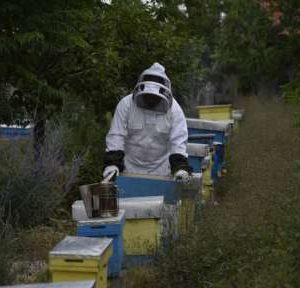 Учени и експерти ще предложат конкретни мерки за спасяване на пчелните семейства