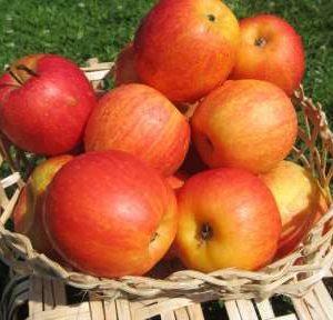 26% от ябълките, предлагани на родния пазар, са произведени у нас