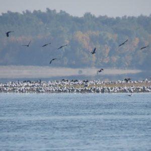 Козлодуй се включва в Европейския ден на птиците