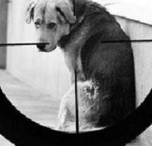 Неизвестен стрелец гръмна домашно куче в село Дреновец