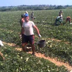 Сезонните работници се осигуряват здравно сами